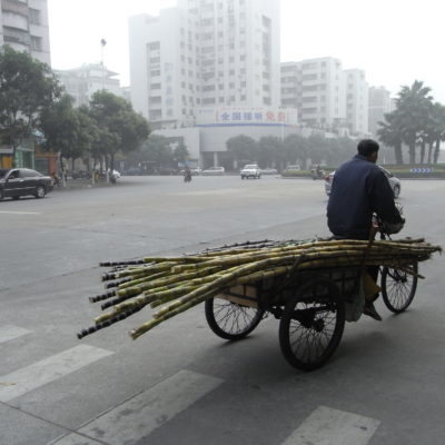 man on bike carrying bamboo