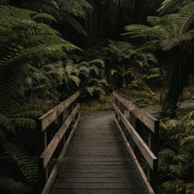 bridge into woodland